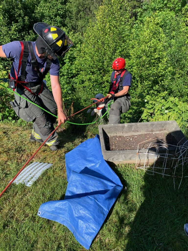 two firefighters in helmets use ropes to rescue a dog from the edge of a cliff